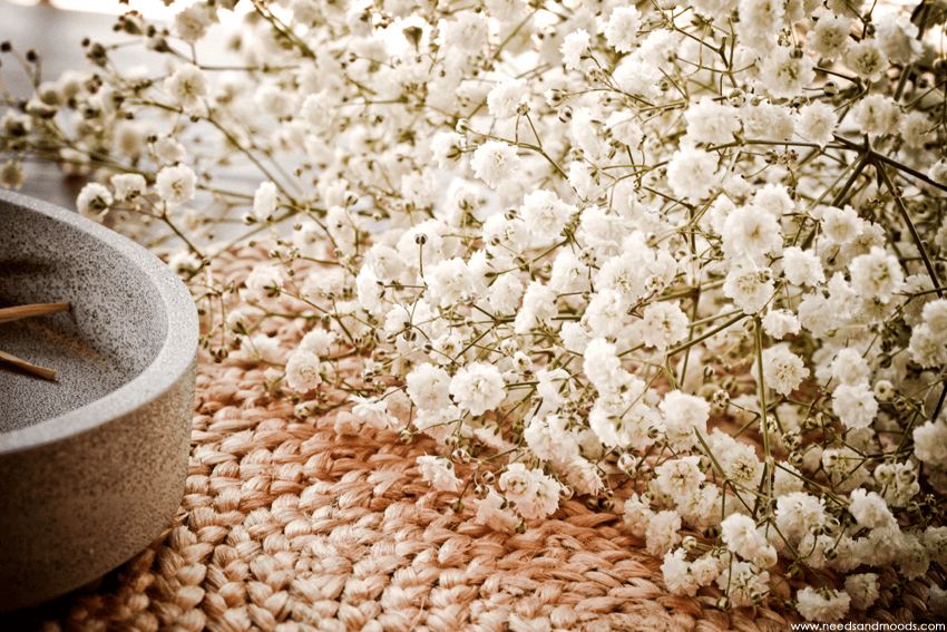 Gypsophile Perfecta