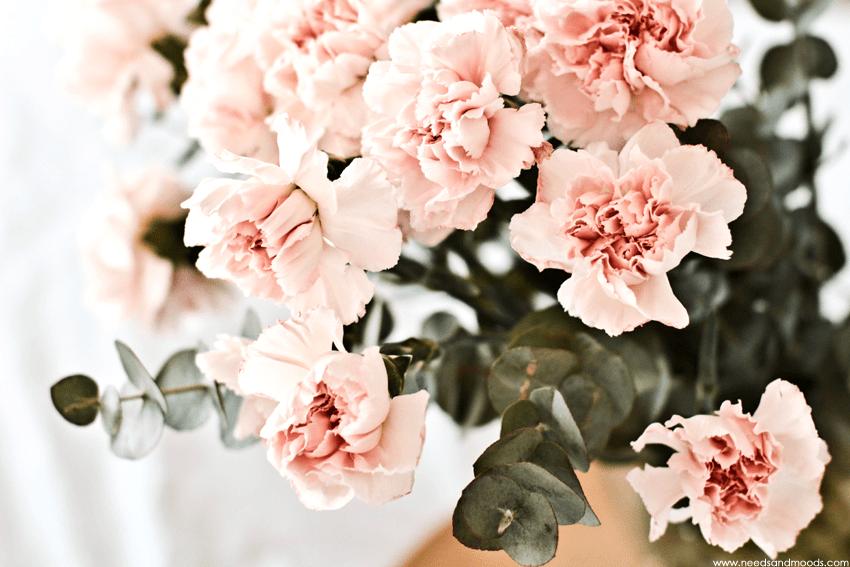 Oeillet rose pâle