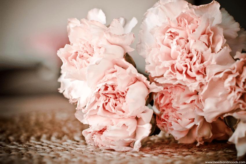 Oeillet sims rose pâle
