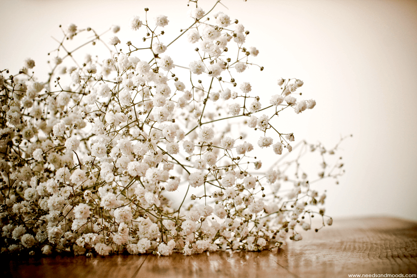bouquet Gypsophile Perfecta
