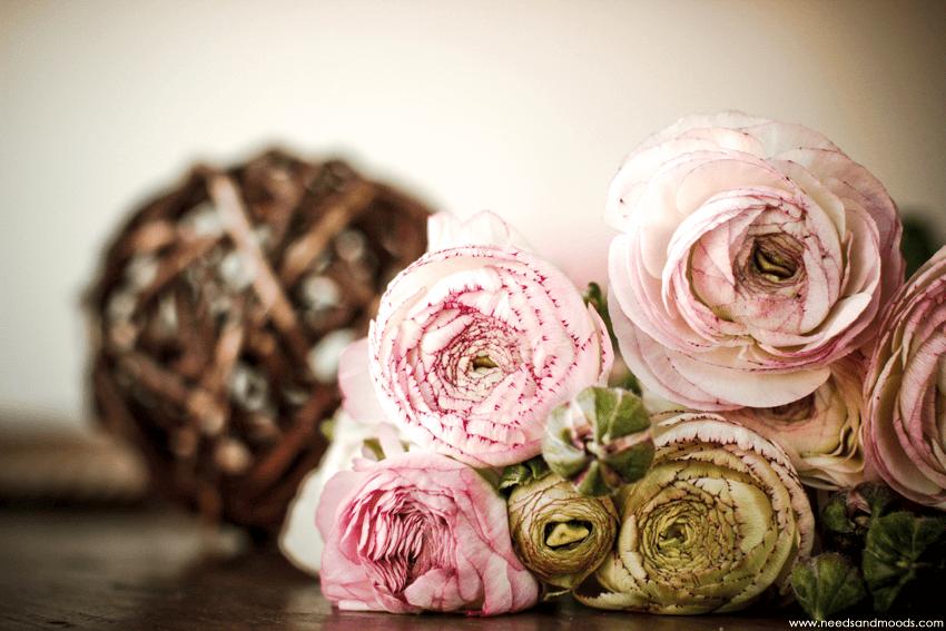 fleur renoncule rose