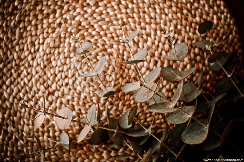 france fleurs Eucalyptus