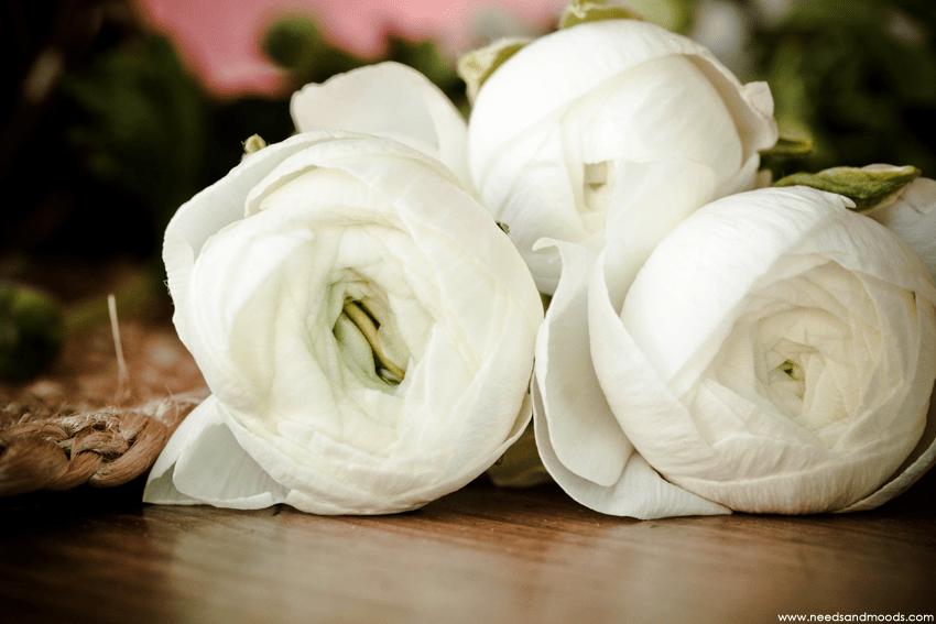 france fleurs renoncule