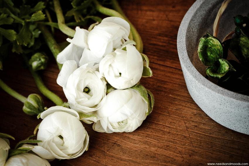 france fleurs renoncules blanches